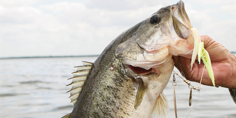 What Is the Best Barometric Pressure for Fishing