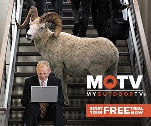 MOTV Sheep
